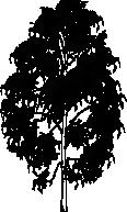 tree 87
