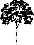 Tree 88