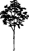 Tree 89