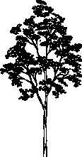 Tree 93