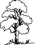 tree 99