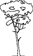 Tree 148