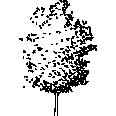 tree 110