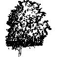 Tree126