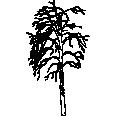 tree 132