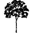 tree 140