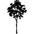 tree 141