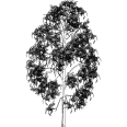 Tree 145