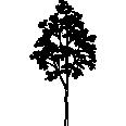 tree 154