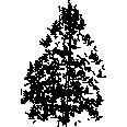 Tree 162