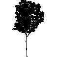 tree 222