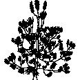 Tree 228