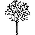 Tree 237