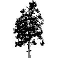 Tree 238