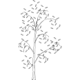 Tree 243
