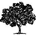 tree 244