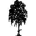 tree 245
