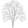 tree 251