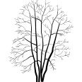 Tree 253