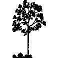 tree 264