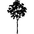 Tree 318