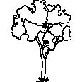 Tree 338
