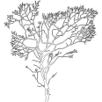 Tree 352