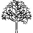 Tree 361