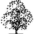 Tree 365