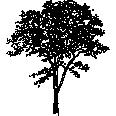 Tree 371