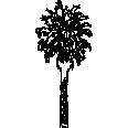 Tree 385