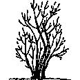 Tree 402