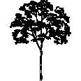 Tree 444
