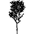 Tree 446