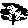 Tree 456