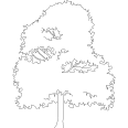 tree 467