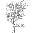 Tree 486