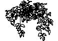 plant 03
