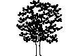 plant 18