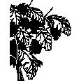 bush 12