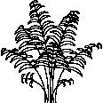 bush 21