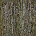 bark 07