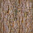 bark 10b