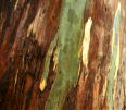 bark 17