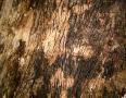 bark 18