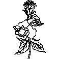 Plant 25