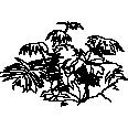 Plant 38
