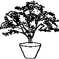 plant 46