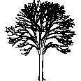 Tree 515