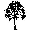 tree 516